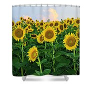 Sunflowers In The Sky Shower Curtain