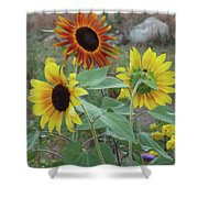 Sunflowers Of August Shower Curtain