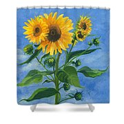 Sunflowers On Bauer Farm Shower Curtain