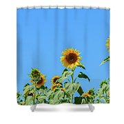 Sunflowers On Blue Shower Curtain