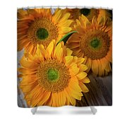Sunflowers On White Boards Shower Curtain