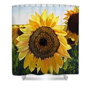 Sunflowers Squared Shower Curtain