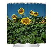 Sunflowers Weldon Spring Mo Ver1_dsc9821_16 Shower Curtain