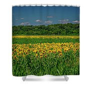 Sunflowers Weldon Spring Mo_dsc9830_16 Shower Curtain