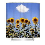 Sunflowers With A Cloud Shower Curtain