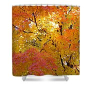 Sunkissed 2 Shower Curtain