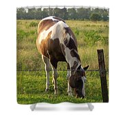Sunkissed Tobiano Shower Curtain
