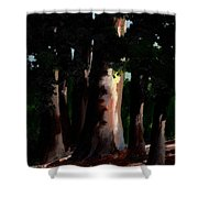 Sunlight And Shadows - Eucalyptus Majesties Shower Curtain