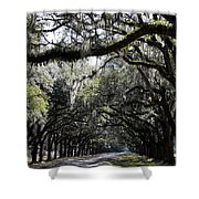 Sunlight And Shadows On Live Oaks Shower Curtain