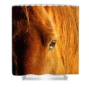 Sunlight Eyes Shower Curtain