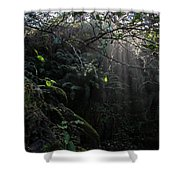 Sunlight Falling Into Glen With Bright Leaves, Vertical Shower Curtain