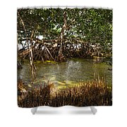 Sunlight In Mangrove Forest Shower Curtain
