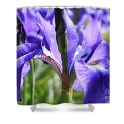 Sunlight On Blue Irises Shower Curtain by Carol Groenen