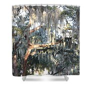 Sunlight On Mossy Tree Shower Curtain