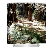 Sunlight On Path Shower Curtain