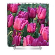 Sunlight On Pink Tulips Shower Curtain