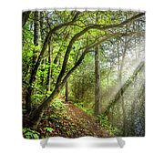 Sunlight On The Trail Shower Curtain