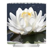 Sunlight On Water Lily Shower Curtain