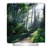 Sunlight Through Trees, Ecola State Shower Curtain