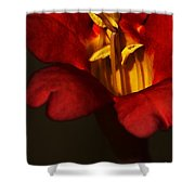 Sunlit Attraction Shower Curtain