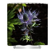 Sunlit Bloom Of Alpine Sea Holly Shower Curtain