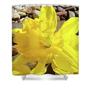 Sunlit Daffodil Flower Spring Rock Garden Baslee Troutman Shower Curtain