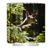 Sunlit Deer Friend Shower Curtain
