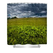 Sunlit Ferns And Purple Vetch Shower Curtain