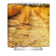 Sunlit Grasses Shower Curtain