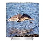 Sunlit Gull Wings Shower Curtain