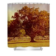 Sunlit Landscape Shower Curtain
