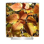 Sunlit Lilac Leaves Shower Curtain