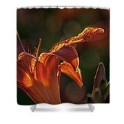 Sunlit Lilly Shower Curtain