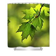 Sunlit Maple Leaves In Spring Shower Curtain