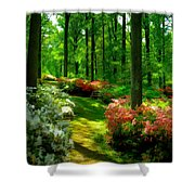 Sunlit Path Shower Curtain