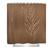 Sunlit Reed Shower Curtain