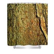 Sunlit Tree Bark Shower Curtain