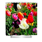 Sunlit Tulips Shower Curtain