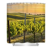 Sunlit Vineyard Shower Curtain