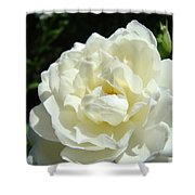 Sunlit White Rose Art Print Floral Giclle Print Baslee Troutman  Shower Curtain