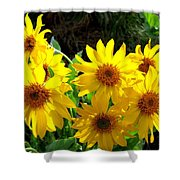 Sunlit Wild Sunflowers Shower Curtain