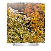 Sunlit Wildflower Shower Curtain
