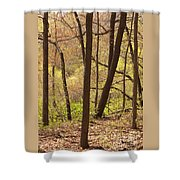 Sunlit Woods Shower Curtain