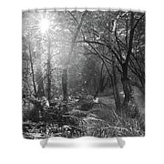 Sunlit Woods, West Dipton Burn Shower Curtain