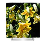 Sunlit Yellow Lilies Art Prints Botanical Giclee Baslee Troutman Shower Curtain