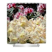 Sunlit Yellow Rhodies Art Print Creamy Rhododendrons Flowers Baslee Troutman Shower Curtain