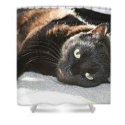 Sunning Black Cat Shower Curtain