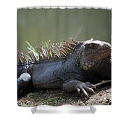 Sunning Gray Iguana Sitting Beside Water Shower Curtain