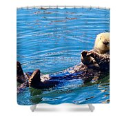 Sunning Otter Shower Curtain