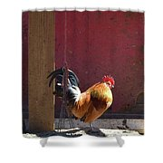 Sunning Rooster Shower Curtain